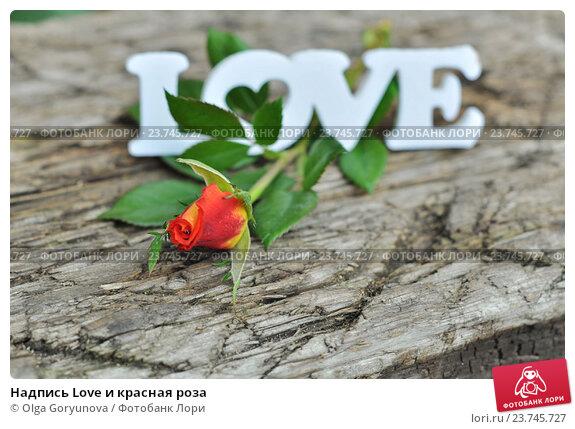 Надпись Love и красная роза. Стоковое фото, фотограф Olga Goryunova / Фотобанк Лори