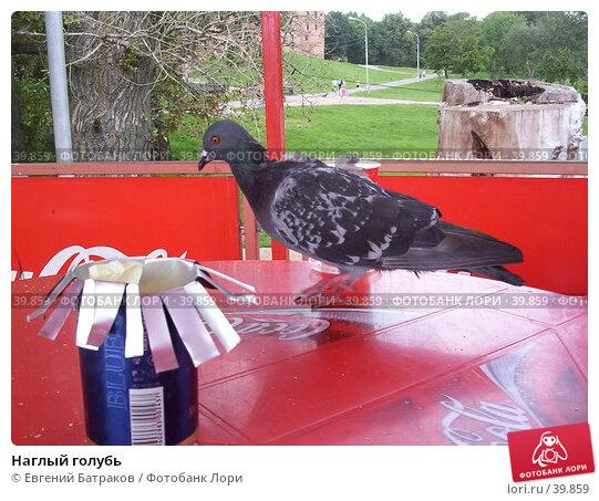 Наглый голубь, фото № 39859, снято 22 июля 2003 г. (c) Евгений Батраков / Фотобанк Лори
