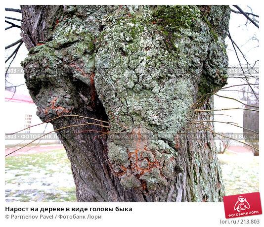 Нарост на дереве в виде головы быка, фото № 213803, снято 13 февраля 2008 г. (c) Parmenov Pavel / Фотобанк Лори
