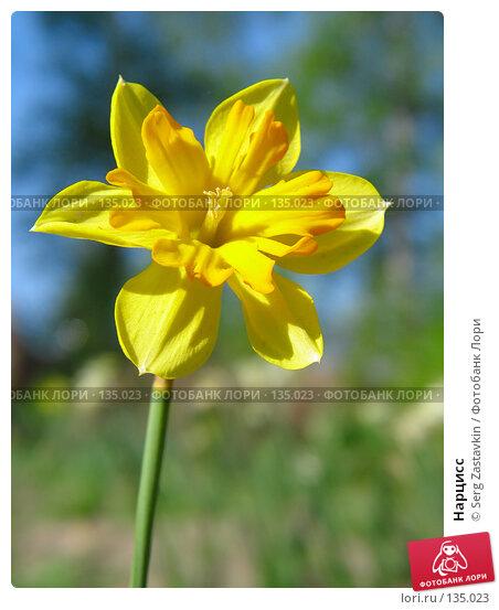 Нарцисс, фото № 135023, снято 20 мая 2005 г. (c) Serg Zastavkin / Фотобанк Лори