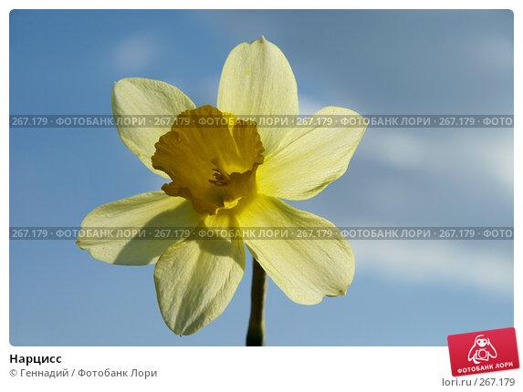 Нарцисс, фото № 267179, снято 27 апреля 2008 г. (c) Геннадий / Фотобанк Лори
