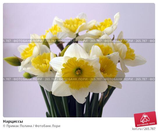 Нарциссы, фото № 265787, снято 12 апреля 2008 г. (c) Примак Полина / Фотобанк Лори
