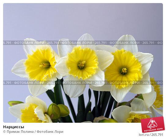 Нарциссы, фото № 265791, снято 12 апреля 2008 г. (c) Примак Полина / Фотобанк Лори
