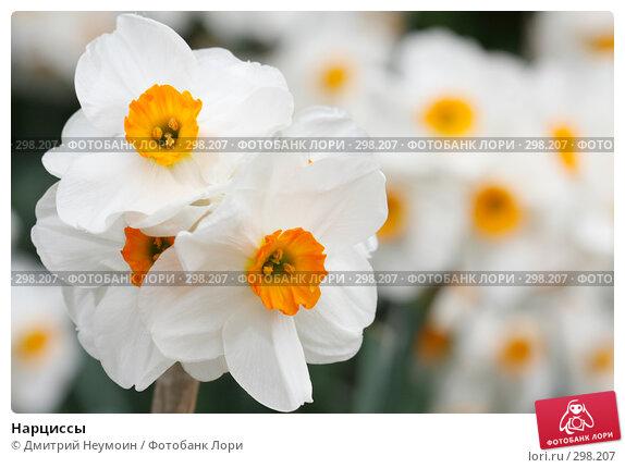 Купить «Нарциссы», эксклюзивное фото № 298207, снято 22 апреля 2008 г. (c) Дмитрий Нейман / Фотобанк Лори