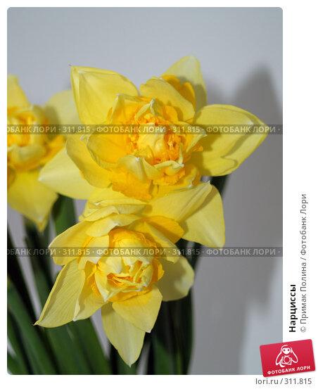 Купить «Нарциссы», фото № 311815, снято 14 апреля 2008 г. (c) Примак Полина / Фотобанк Лори