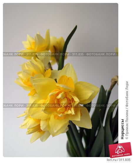 Нарциссы, фото № 311835, снято 14 апреля 2008 г. (c) Примак Полина / Фотобанк Лори