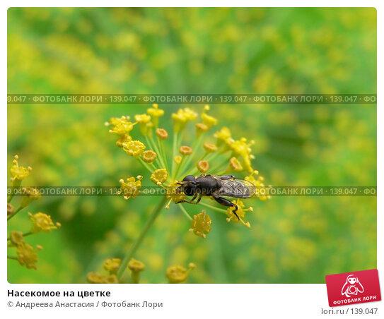 Насекомое на цветке, фото № 139047, снято 31 июля 2006 г. (c) Андреева Анастасия / Фотобанк Лори