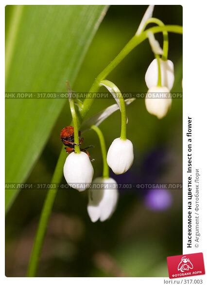 Насекомое на цветке. Insect on a flower, фото № 317003, снято 5 июня 2008 г. (c) Argument / Фотобанк Лори
