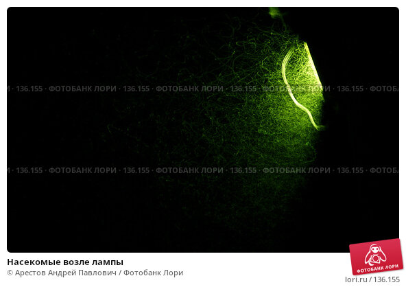 Насекомые возле лампы, фото № 136155, снято 19 июля 2007 г. (c) Арестов Андрей Павлович / Фотобанк Лори