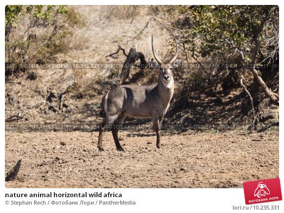 Купить «nature animal horizontal wild africa», фото № 10235331, снято 19 марта 2019 г. (c) PantherMedia / Фотобанк Лори