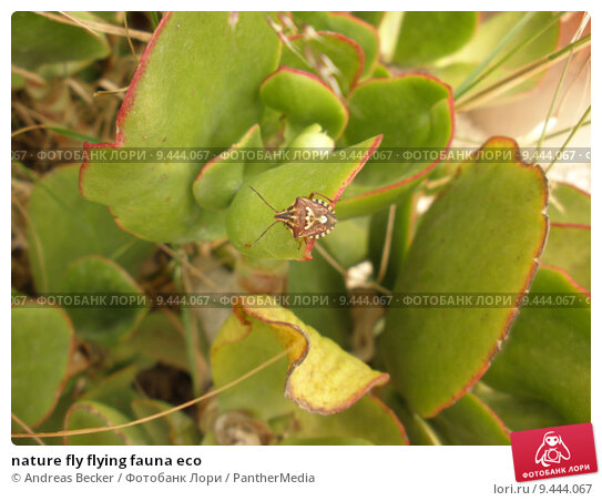 Купить «nature fly flying fauna eco», фото № 9444067, снято 24 июля 2019 г. (c) PantherMedia / Фотобанк Лори