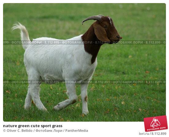 Купить «nature green cute sport grass», фото № 8112899, снято 22 мая 2019 г. (c) PantherMedia / Фотобанк Лори