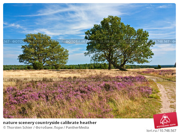 Купить «nature scenery countryside calibrate heather», фото № 10748567, снято 22 апреля 2019 г. (c) PantherMedia / Фотобанк Лори