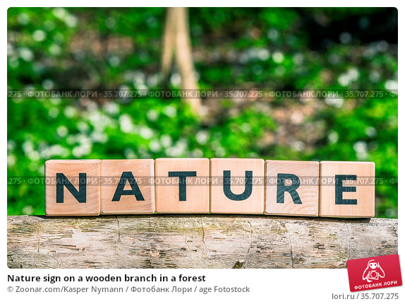 Nature sign on a wooden branch in a forest. Стоковое фото, фотограф Zoonar.com/Kasper Nymann / age Fotostock / Фотобанк Лори