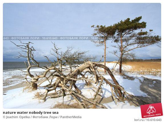 nature water nobody tree sea. Стоковое фото, фотограф Joachim Opelka / PantherMedia / Фотобанк Лори