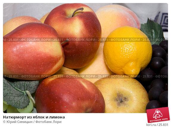 Натюрморт из яблок и лимона, фото № 25831, снято 20 марта 2007 г. (c) Юрий Синицын / Фотобанк Лори