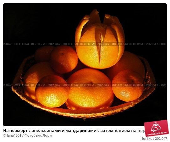 Купить «Натюрморт с апельсинами и мандаринами с затемнением на черном фоне», эксклюзивное фото № 202047, снято 9 декабря 2007 г. (c) lana1501 / Фотобанк Лори