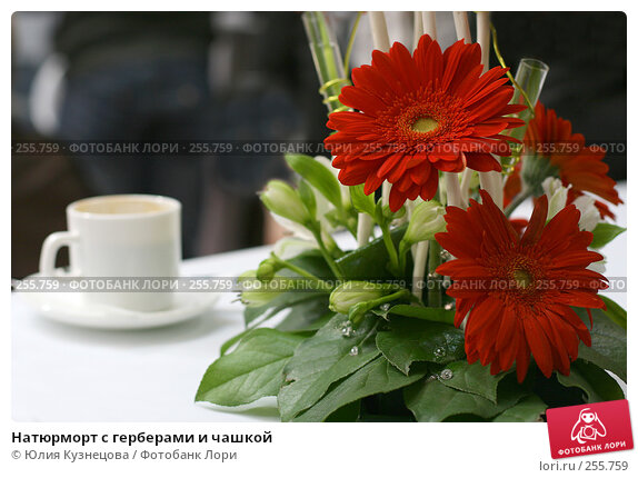 Натюрморт с герберами и чашкой, фото № 255759, снято 23 августа 2017 г. (c) Юлия Кузнецова / Фотобанк Лори