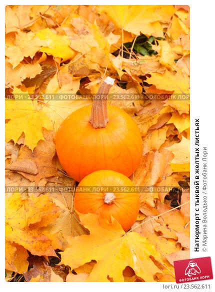 Купить «Натюрморт с тыквой в желтых листьях», фото № 23562611, снято 28 октября 2015 г. (c) Марина Володько / Фотобанк Лори
