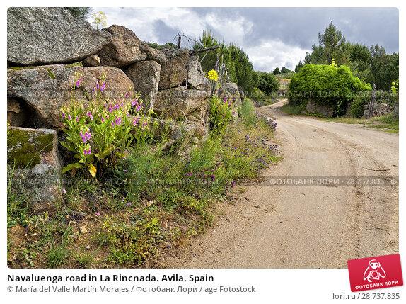 Купить «Navaluenga road in La Rincnada. Avila. Spain», фото № 28737835, снято 9 июня 2018 г. (c) age Fotostock / Фотобанк Лори