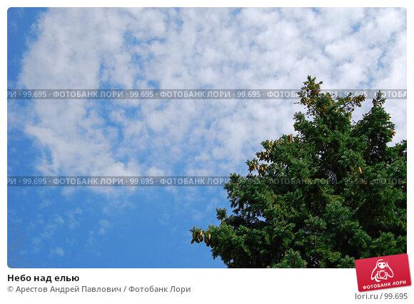 Купить «Небо над елью», фото № 99695, снято 1 сентября 2007 г. (c) Арестов Андрей Павлович / Фотобанк Лори