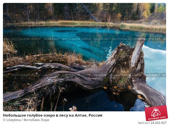 Купить «Небольшое голубое озеро в лесу на Алтае, Россия», фото № 24202927, снято 27 сентября 2016 г. (c) Liseykina / Фотобанк Лори
