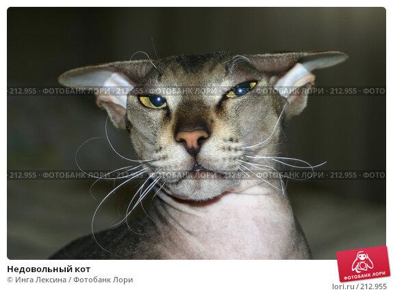 Недовольный кот, фото № 212955, снято 29 июня 2004 г. (c) Инга Лексина / Фотобанк Лори