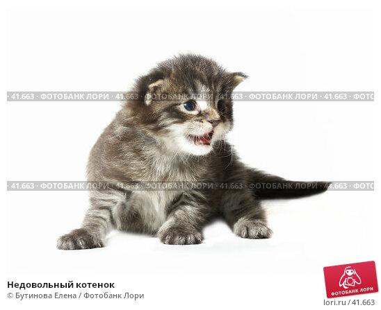 Недовольный котенок, фото № 41663, снято 22 апреля 2007 г. (c) Бутинова Елена / Фотобанк Лори