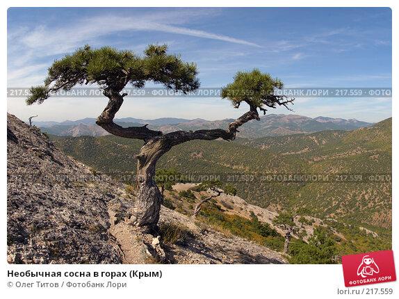 Необычная сосна в горах (Крым), фото № 217559, снято 18 сентября 2006 г. (c) Олег Титов / Фотобанк Лори