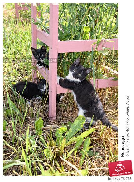 Непоседы, фото № 76275, снято 7 июля 2007 г. (c) Ivan I. Karpovich / Фотобанк Лори