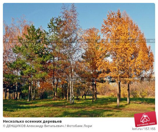 Несколько осенних деревьев, фото № 157155, снято 27 октября 2007 г. (c) ДЕНЩИКОВ Александр Витальевич / Фотобанк Лори