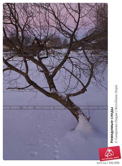 Неведомые следы, фото № 192995, снято 4 января 2008 г. (c) Смирнова Лидия / Фотобанк Лори