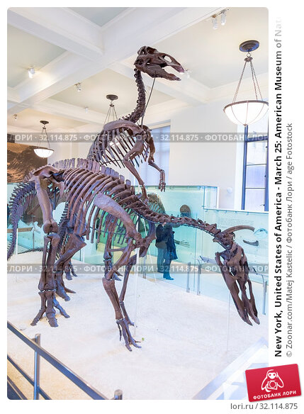 New York, United States of America - March 25: American Museum of Natural History holds large collection of prehistoric exhibits from all world. Dinosaur skeleton exhibit on March 25, 2015. Стоковое фото, фотограф Zoonar.com/Matej Kastelic / age Fotostock / Фотобанк Лори