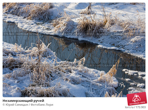Незамерзающий ручей, фото № 173903, снято 8 января 2008 г. (c) Юрий Синицын / Фотобанк Лори