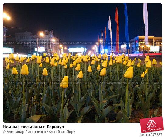Ночные тюльпаны г. Барнаул, фото № 37887, снято 19 января 2017 г. (c) Александр Литовченко / Фотобанк Лори