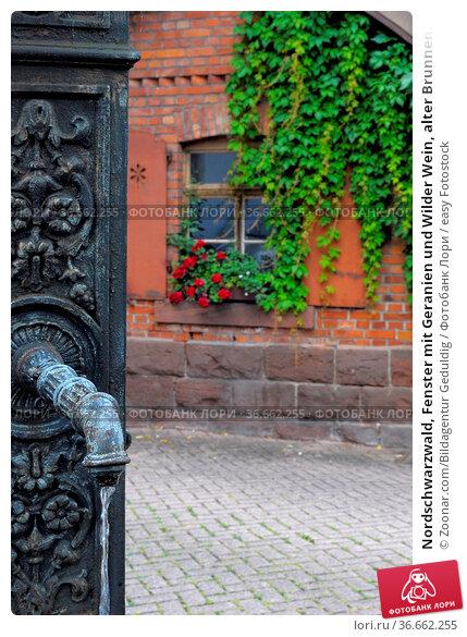 Nordschwarzwald, Fenster mit Geranien und Wilder Wein, alter Brunnen... Стоковое фото, фотограф Zoonar.com/Bildagentur Geduldig / easy Fotostock / Фотобанк Лори