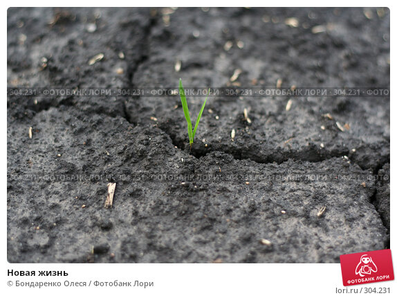 Новая жизнь, фото № 304231, снято 31 мая 2008 г. (c) Бондаренко Олеся / Фотобанк Лори