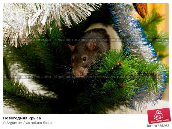 Новогодняя крыса, фото № 86983, снято 2 сентября 2007 г. (c) Argument / Фотобанк Лори