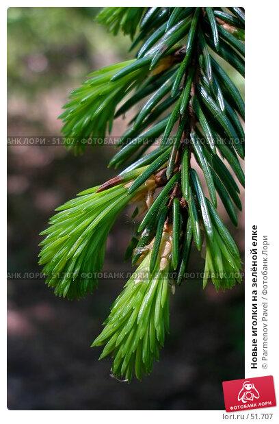 Новые иголки на зелёной елке, фото № 51707, снято 26 мая 2007 г. (c) Parmenov Pavel / Фотобанк Лори