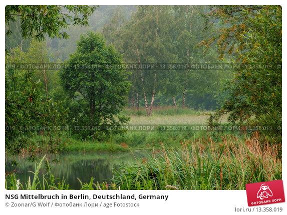 Купить «NSG Mittelbruch in Berlin, Deutschland, Germany», фото № 13358019, снято 22 июля 2019 г. (c) age Fotostock / Фотобанк Лори