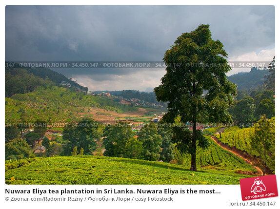 Nuwara Eliya tea plantation in Sri Lanka. Nuwara Eliya is the most... Стоковое фото, фотограф Zoonar.com/Radomir Rezny / easy Fotostock / Фотобанк Лори