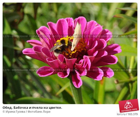 Обед. Бабочка и пчела на цветке., фото № 183379, снято 29 августа 2007 г. (c) Ирина Гусева / Фотобанк Лори