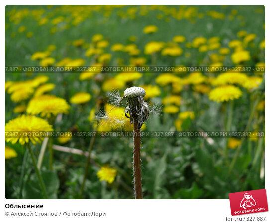 Облысение, фото № 327887, снято 24 мая 2008 г. (c) Алексей Стоянов / Фотобанк Лори