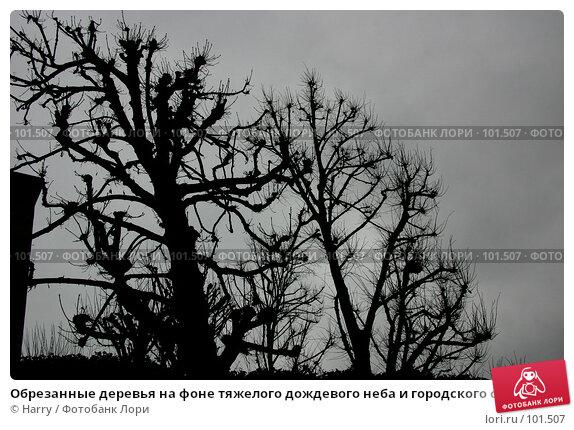 Обрезанные деревья на фоне тяжелого дождевого неба и городского смога в Париже, Франция, фото № 101507, снято 22 февраля 2006 г. (c) Harry / Фотобанк Лори