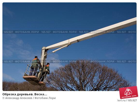 Обрезка деревьев. Весна..., эксклюзивное фото № 165927, снято 6 марта 2007 г. (c) Александр Алексеев / Фотобанк Лори