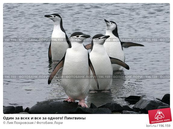 Один за всех и все за одного! Пингвины, фото № 196159, снято 14 января 2008 г. (c) Лия Покровская / Фотобанк Лори