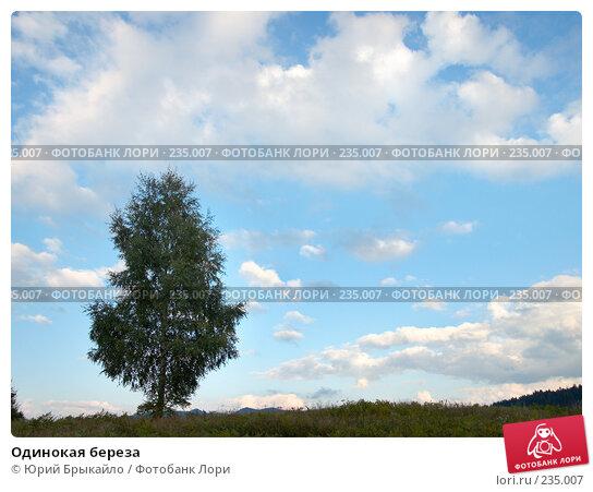 Одинокая береза, фото № 235007, снято 2 сентября 2007 г. (c) Юрий Брыкайло / Фотобанк Лори