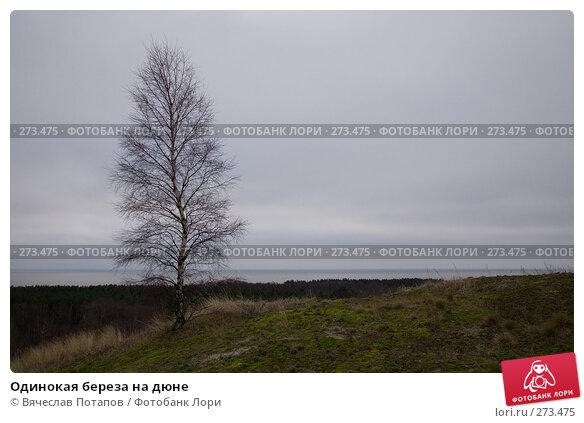 Одинокая береза на дюне, фото № 273475, снято 21 декабря 2007 г. (c) Вячеслав Потапов / Фотобанк Лори