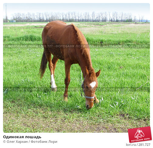 Одинокая лошадь, фото № 281727, снято 20 апреля 2008 г. (c) Олег Хархан / Фотобанк Лори