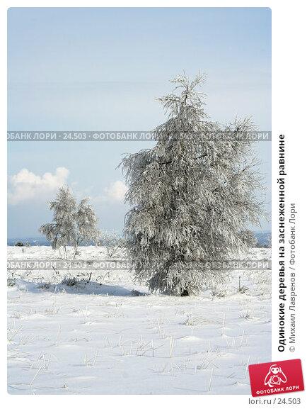 Одинокие деревья на заснеженной равнине, фото № 24503, снято 12 февраля 2006 г. (c) Михаил Лавренов / Фотобанк Лори